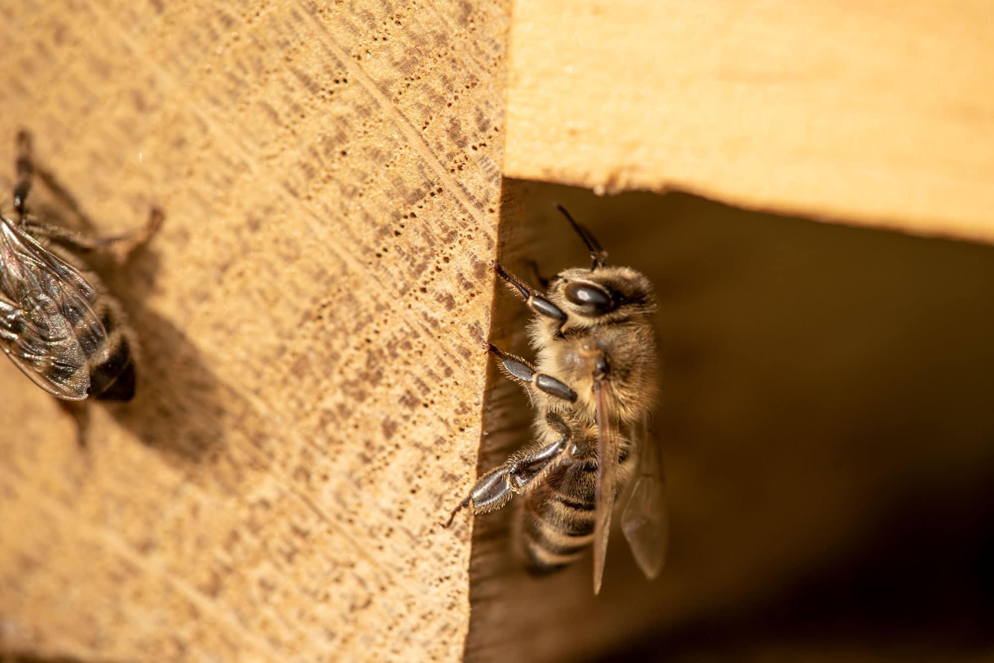 Lunor Bienen
